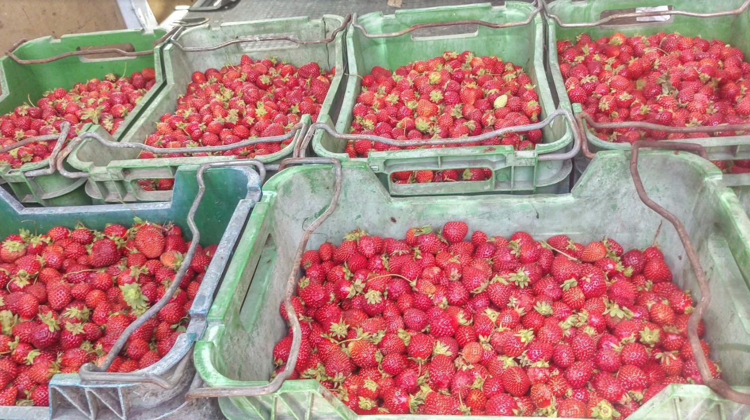 heaps of strawberries